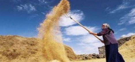 Bugün  Dünya Çiftçiler Günü