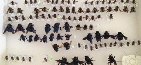 Tarım İlaçları Arıların Hayatını Mahvediyor