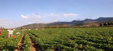 Fatura mağduru çiftçiler için son tarih 1 Ekim 2013