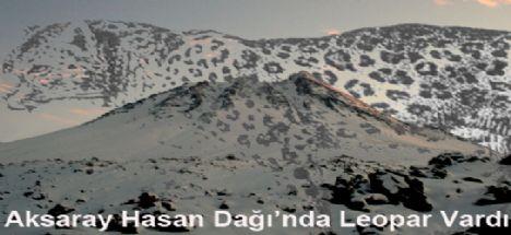 Aksaray Hasan Dağı'nda Leopar vardı