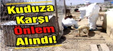 Seydişehir'de Kuduz  Vakası