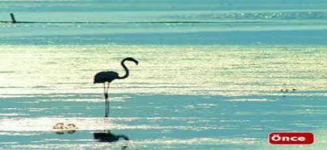 Tuz Gölü Havzasında Büyük Tehlike