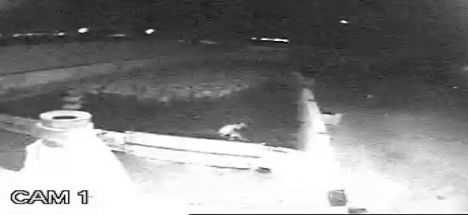Bu Kez Güvenlik Kamerasını Kurtun Saldırısı Takıldı
