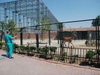 Karatay Belediyesi Hayvanat Bahçesinde Hayvanlar Fıskiye İle Serinletiliyor