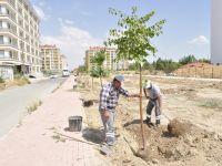 Karatay'da Ağaçlandırma Çalışmaları Devam Ediyor