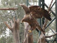 Karatay Belediyesi Hayvanat Bahçesi Yaralı Hayvanları Tedavi Etmeye Devam Ediyor