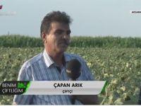 Eskil'in Yağlık ayçiçeği üretimi Bereket TV Ekranlarında tanıtıldıVİDEO