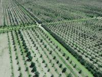 Aslım Ormanı Karatay'ın Oksijen Deposu Olmaya Devam Ediyor